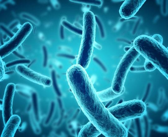 Antibióticos criam superbactérias que matarão mais do que o câncer em 2050